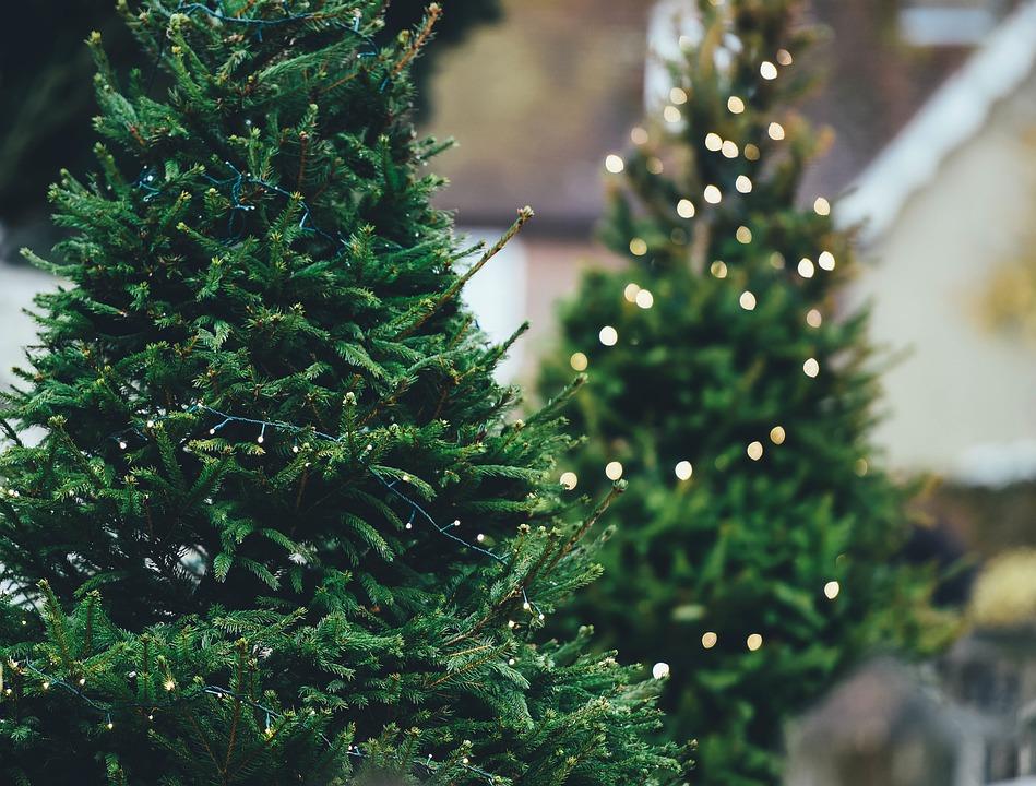 Fæld dit eget juletræ på Dyssegaarden